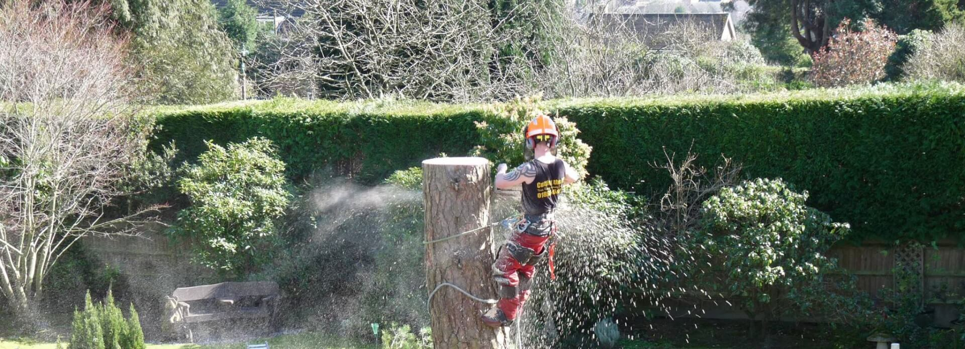 Tree Surgeons in East Grinstead